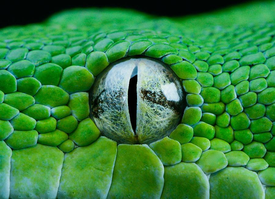 Потрясающие портреты змей