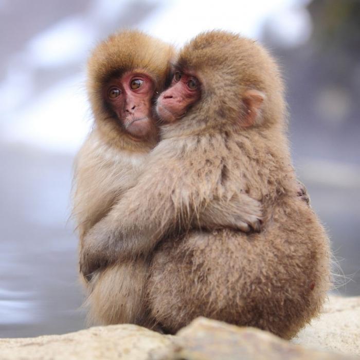 Влюбленные животные