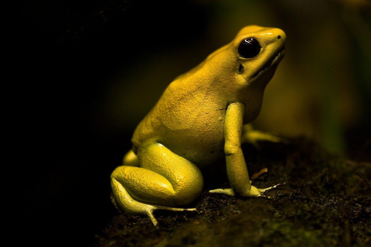 10 маленьких и смертельно опасных существ мира