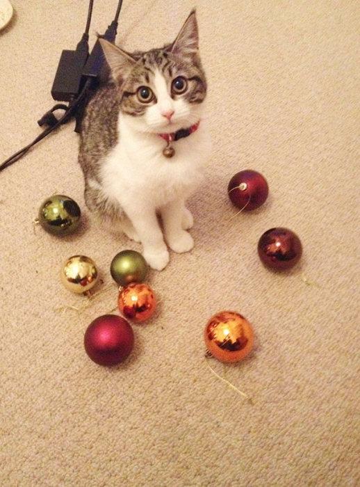 Кошки очень любят разные безделушки