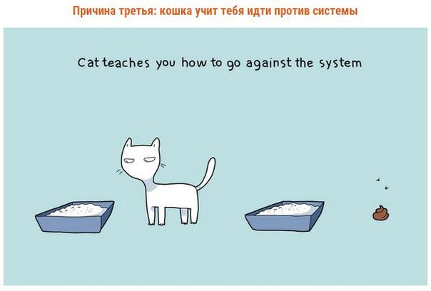 10 причин завести кошку