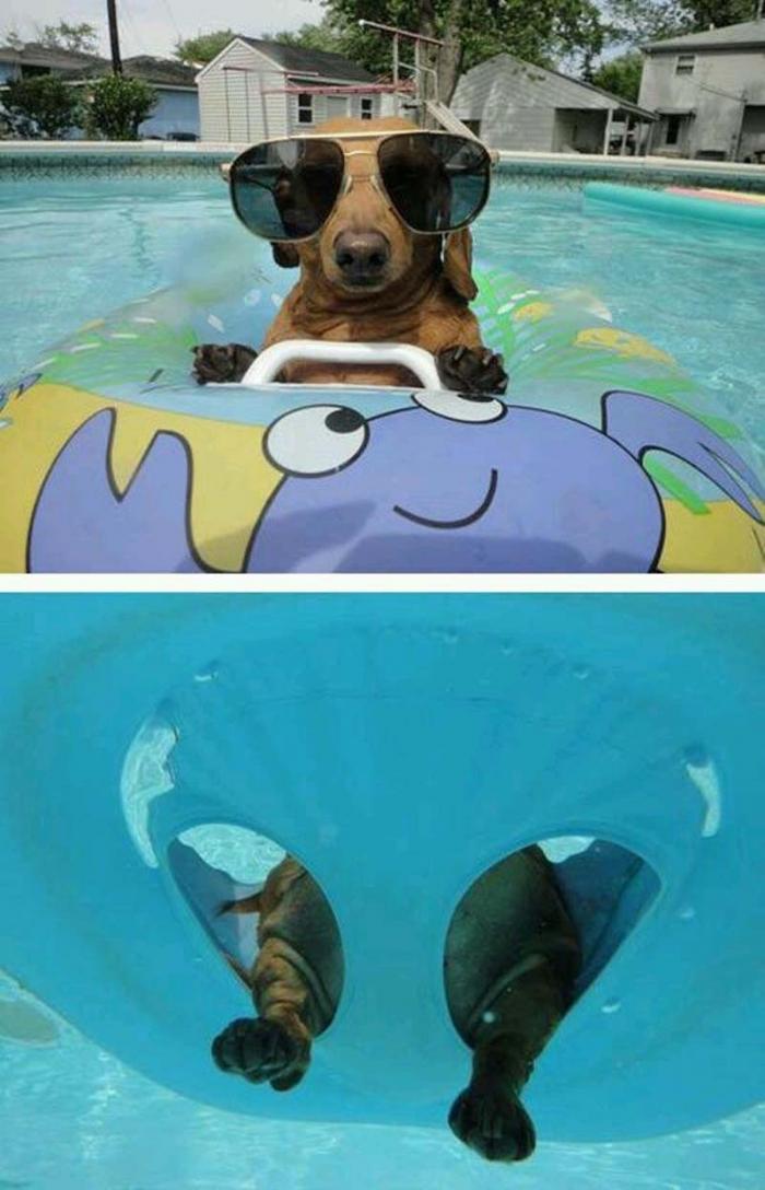 Животные любят отдых у бассейна