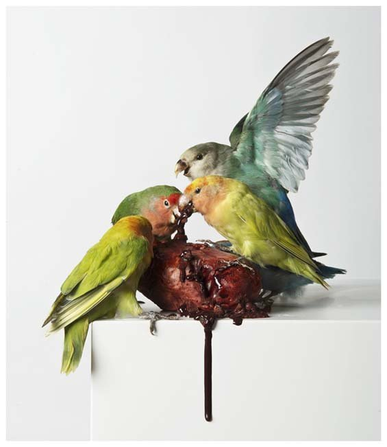 Работы художника-таксидермиста Polly Morgan