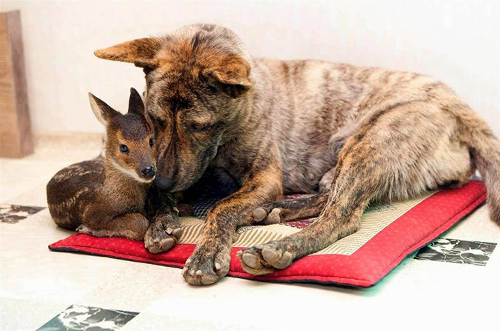 Удивительная дружба и любовь между разными животными