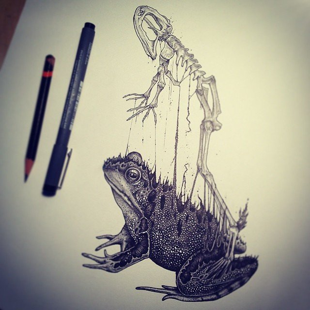 Анатомические рисунки животных от Пола Джексона