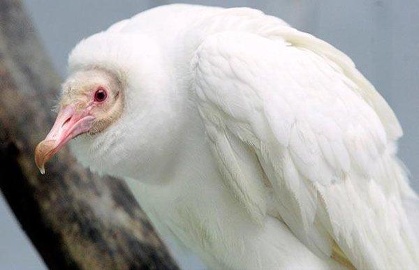 11 необычных животных-альбиносов