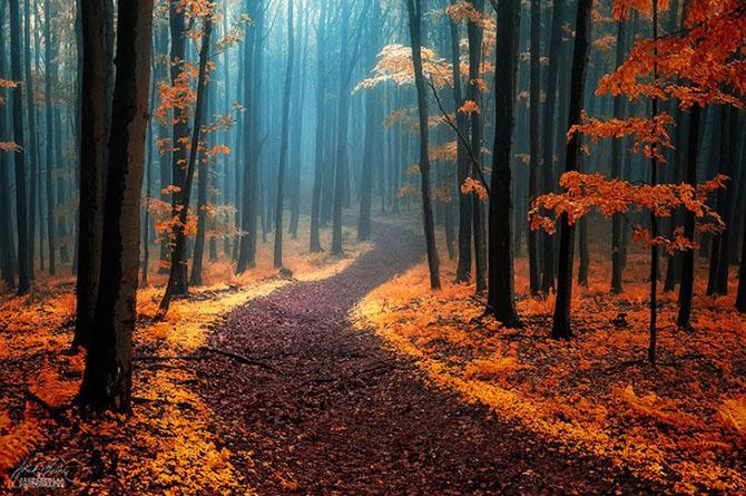 Красивые тропы из разных мест