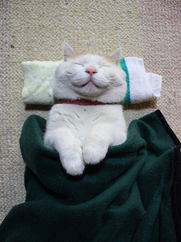 Самые довольные кошки из сети