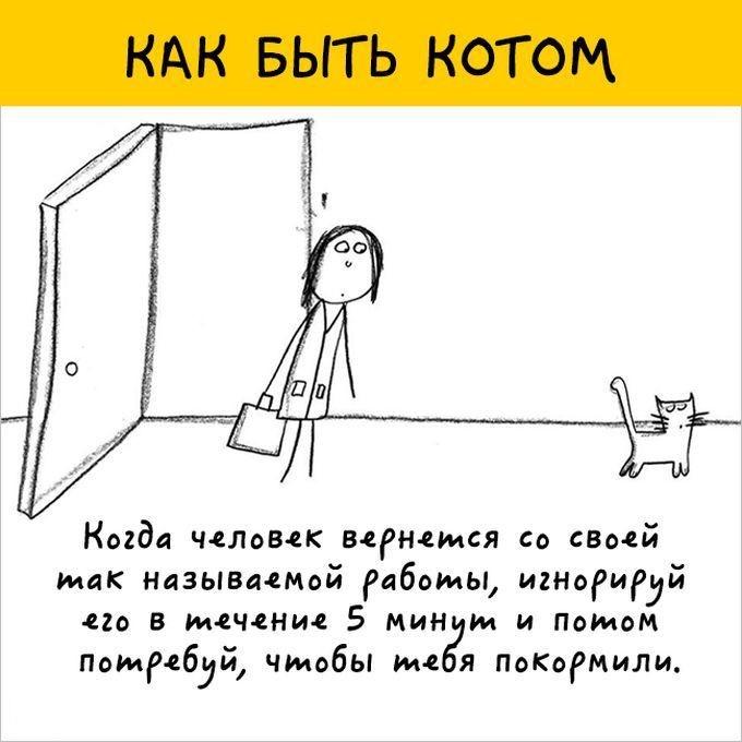 Искусство быть котом