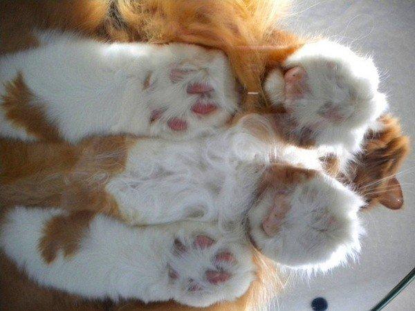 Кошки лежат на стекле: вид снизу