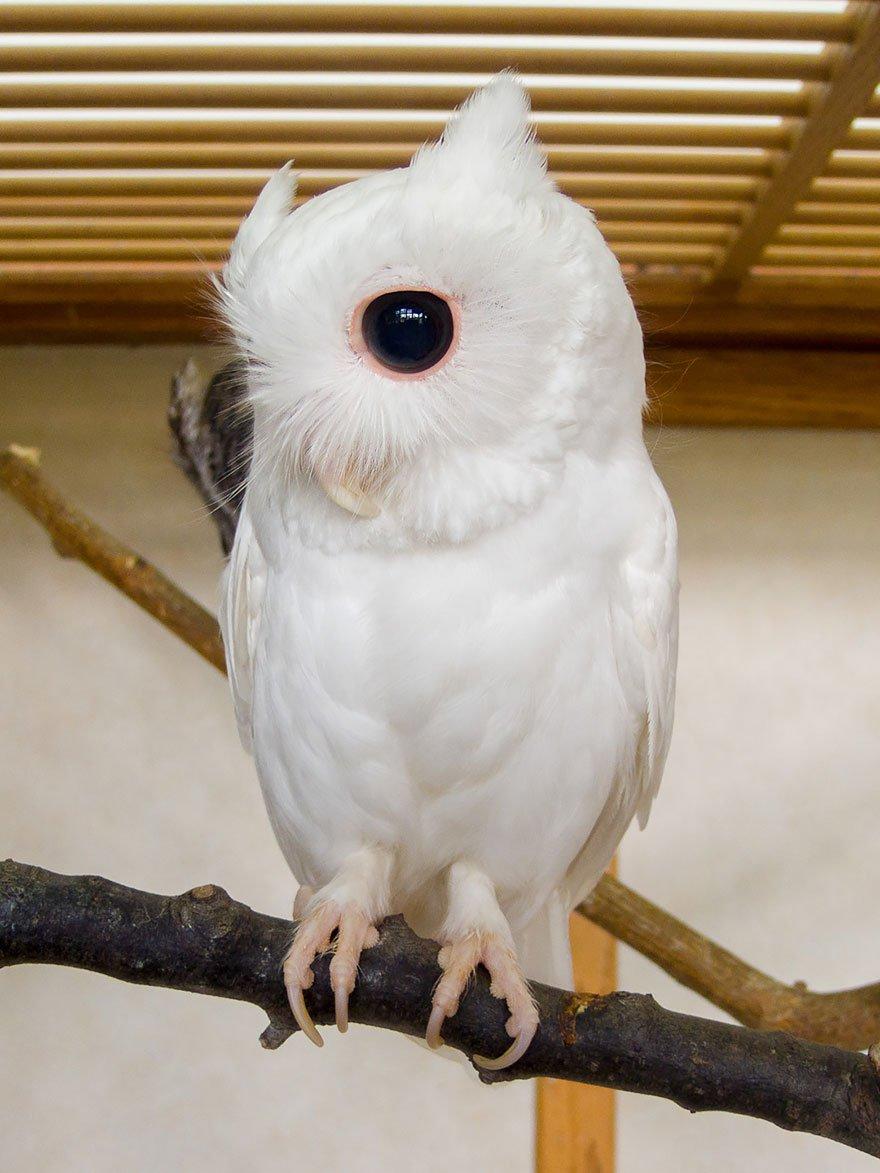 Животные-альбиносы выглядят отлично