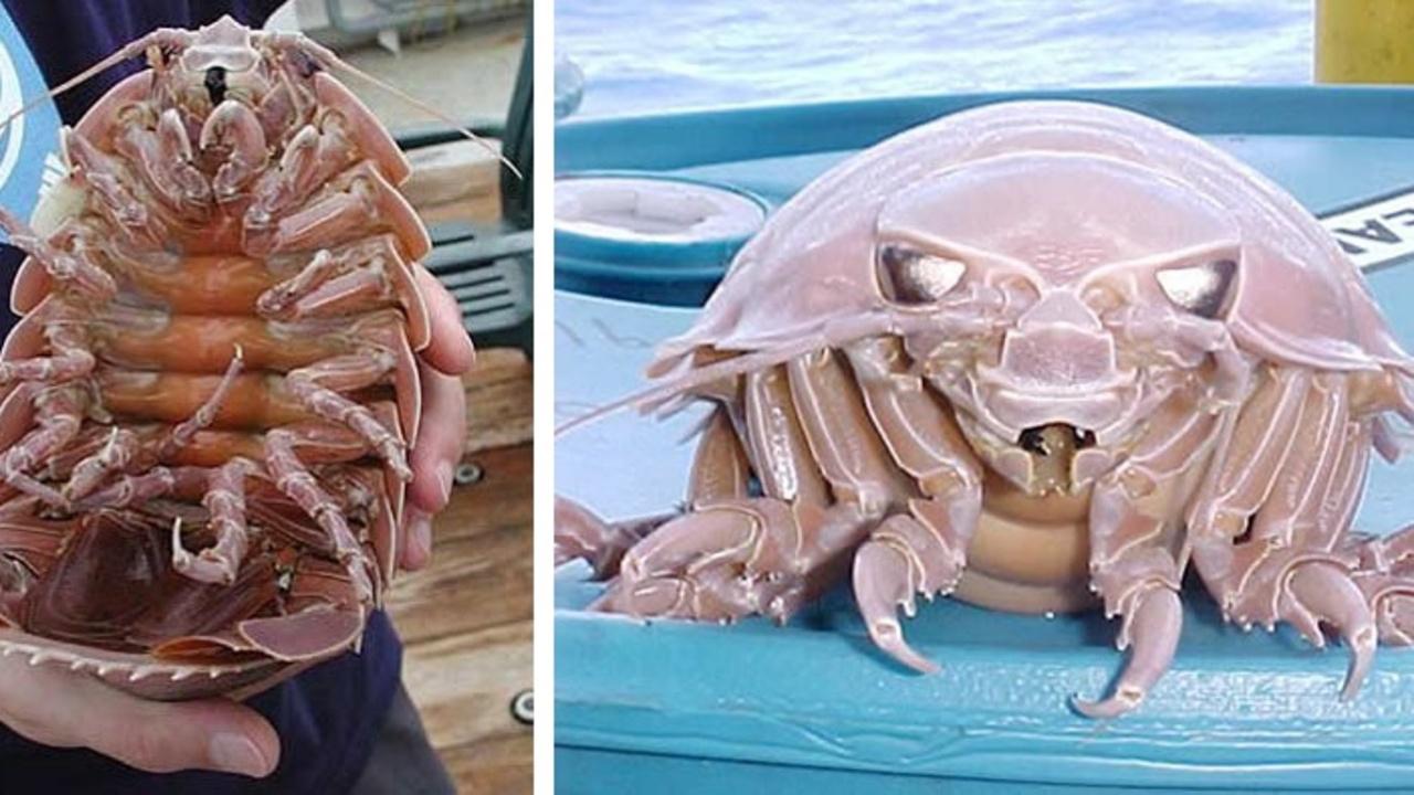 Самые крупные и загадочные обитатели морских глубин