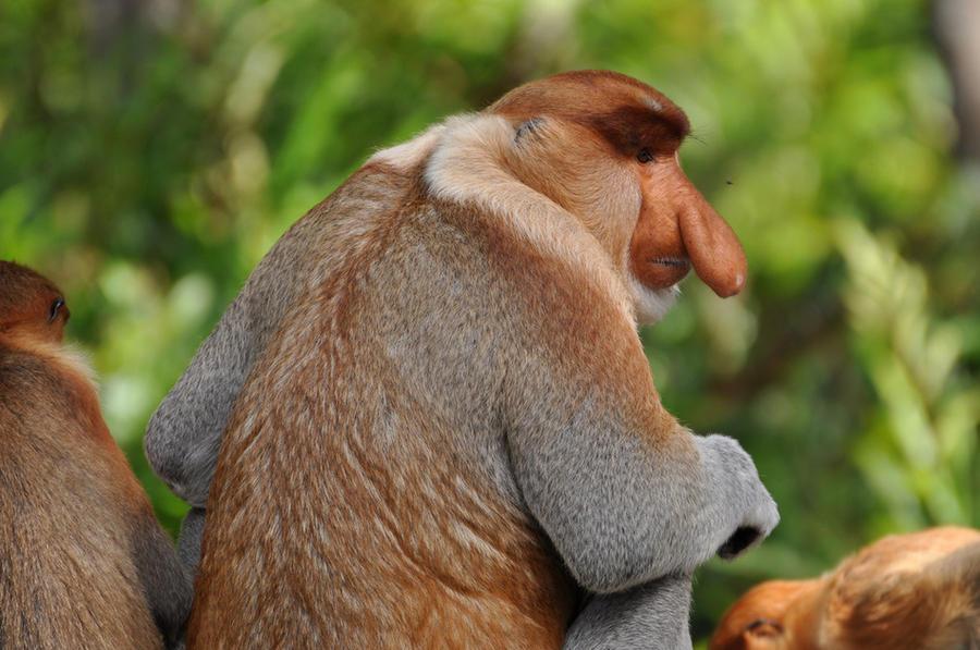 Животные с несоразмерными частями тела