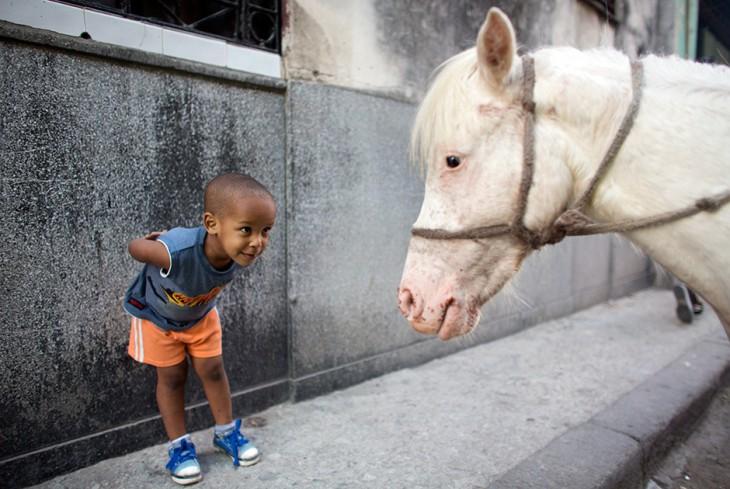 20 лучших фотографий агентства Reuters в Instagram за первую половину 2015 года