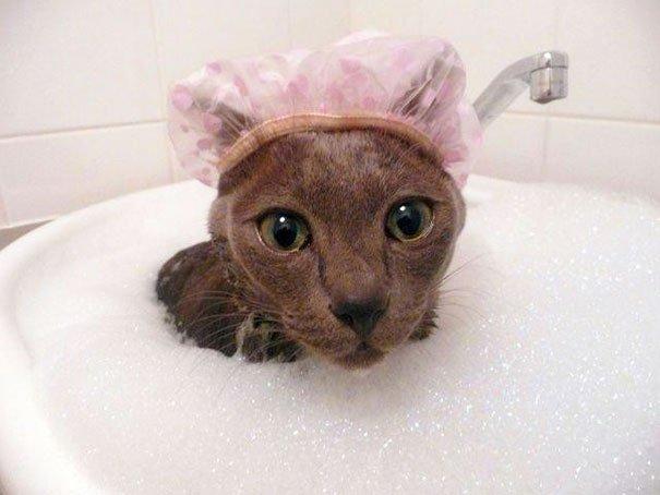 Животные тоже любят купаться
