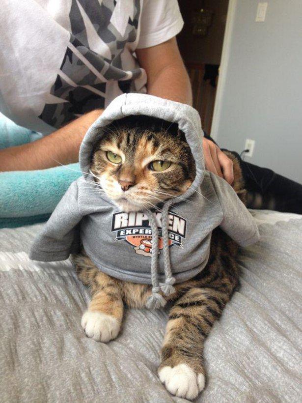 Коты и позитив на фотографиях