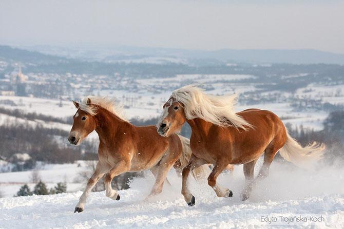 15 самых восхитительных пород лошадей