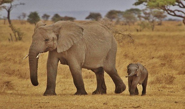 Популярные мифы о животных