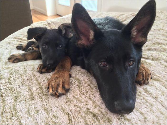 Собаки со своими щенками