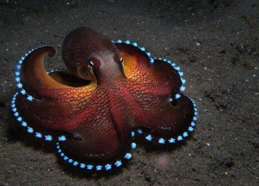 Поразительные и необычные осьминоги