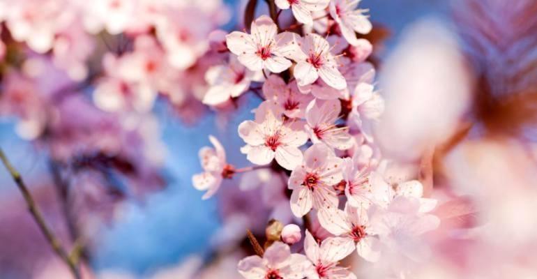 Японская философия в пословицах и поговорках