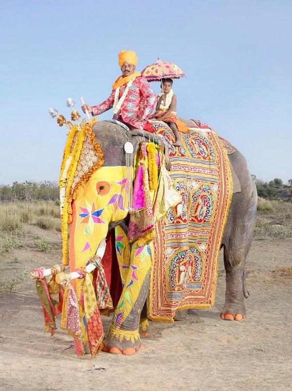 На фестивале слонов в Индии