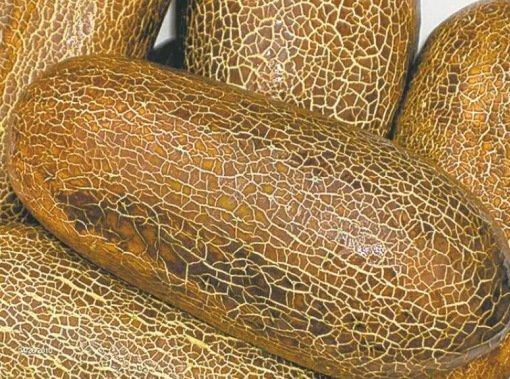Самые необычные огурцы в мире