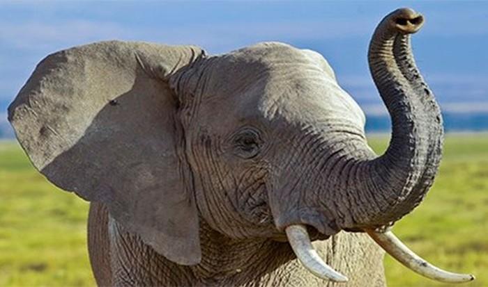 Неожиданные факты о поведении животных