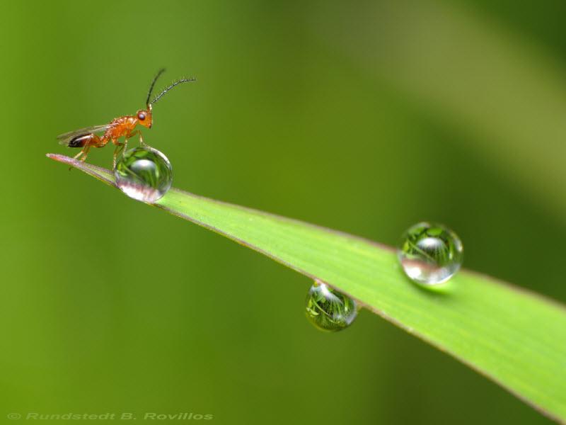 Природная красота насекомых от австралийского фотографа Рундштедта Ровиллоса
