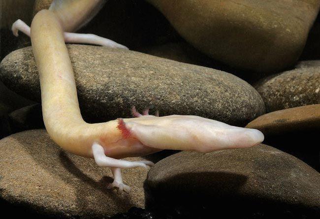 Редкие и удивительные животные с неземной внешностью