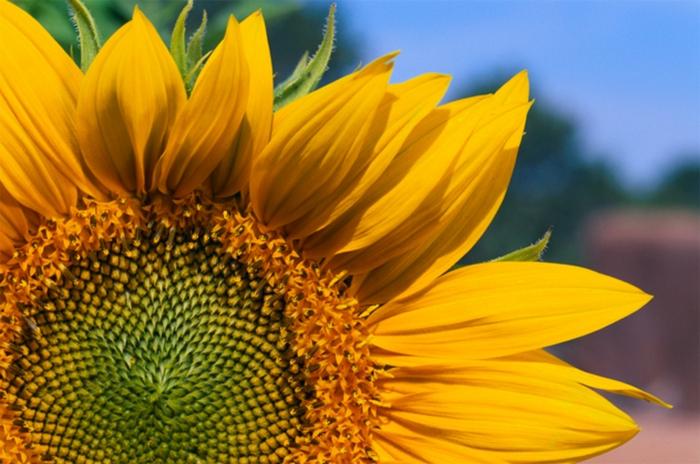 10 секретов природы, которых учёным пока не удалось раскрыть