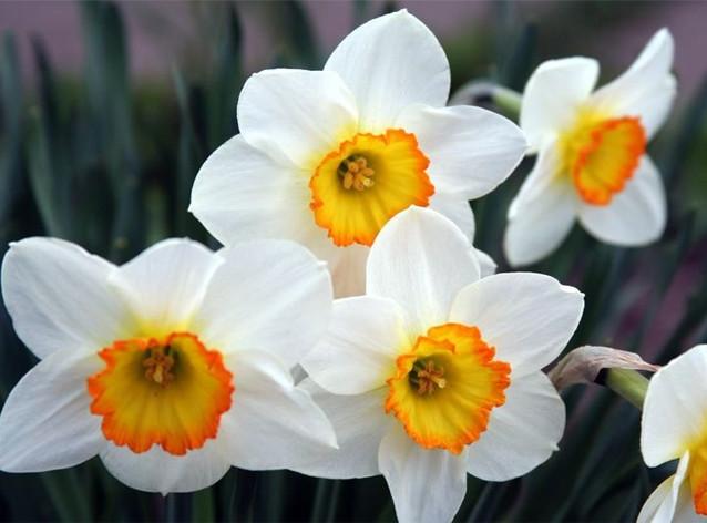 Цветы, которые опасны для жизни