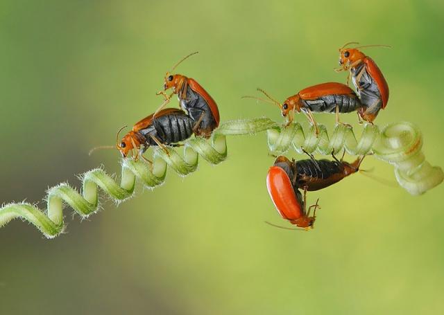 Взаимоотношения насекомых на макрофотографиях Нордина Серайана