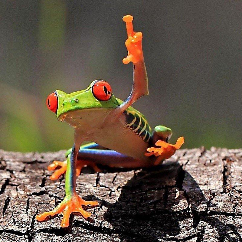 Забавные и очаровательные лягушки
