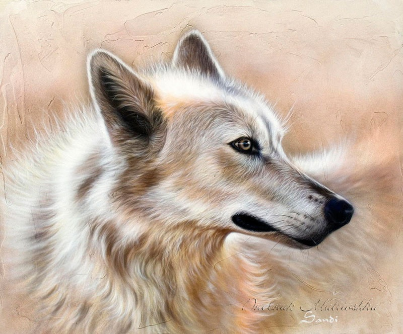 Необыкновенные рисунки животных от Sandi Baker