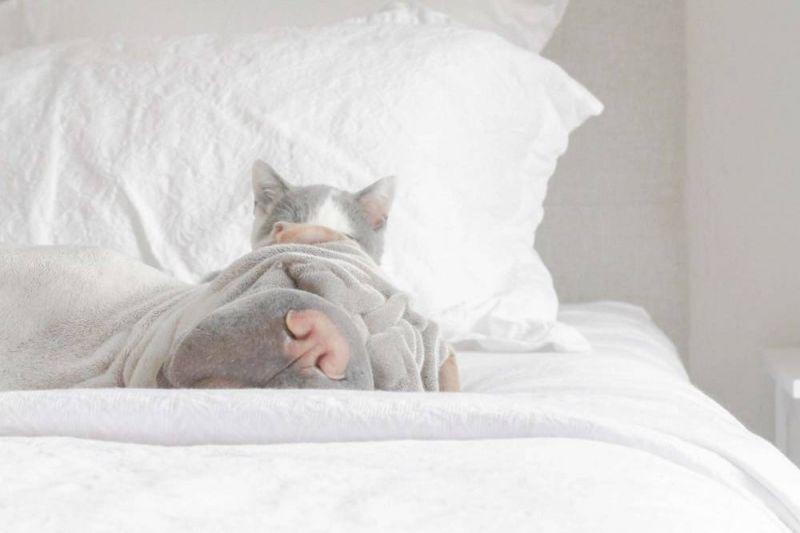 Шарпей Пэддингтон и кот Батлер в Instagram