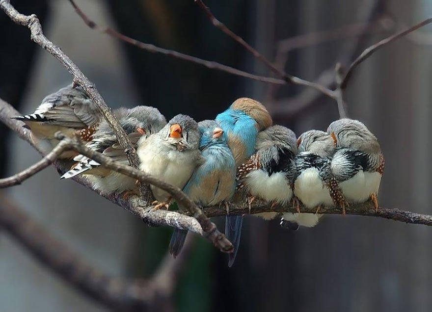 Фотографии греющихся птичек наполняют сердце приятными эмоциями