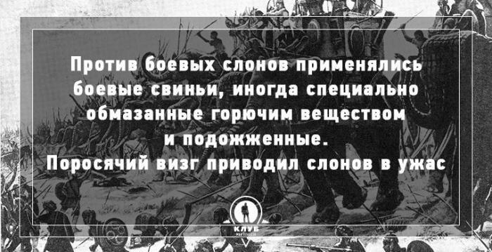 Интересные факты о войне