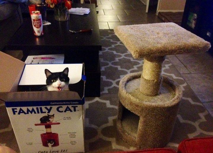 Девять способов свести хозяина с ума для котов