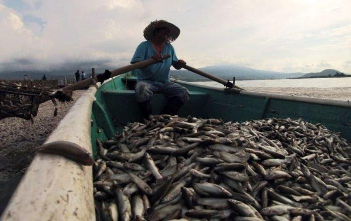 Экологическая трагедия в мексиканском озере Кахититлан