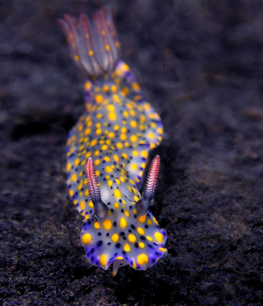 Потрясающе морские моллюски