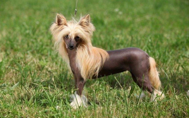 Породы собак с прекрасным характером, которые сложно назвать красивыми