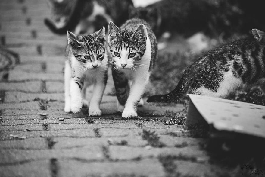 Чёрно-белые фотографии котов от Моники Малек