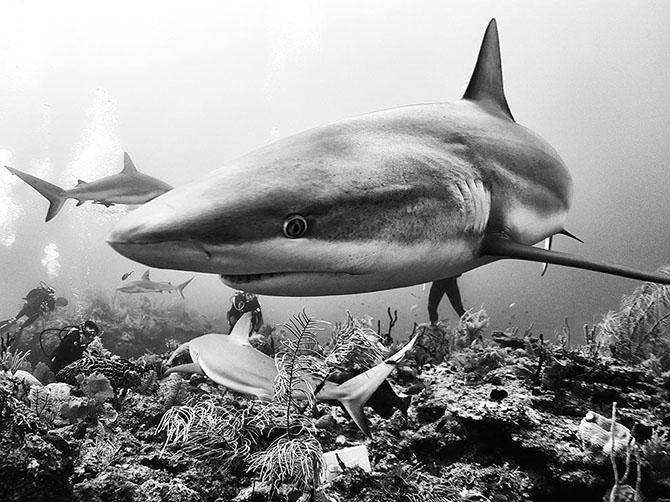 Лучшие фотографии августа 2015 от журнала National Geographic