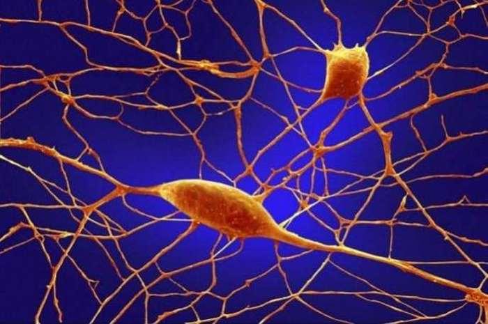 Части человеческого организма под микроскопом