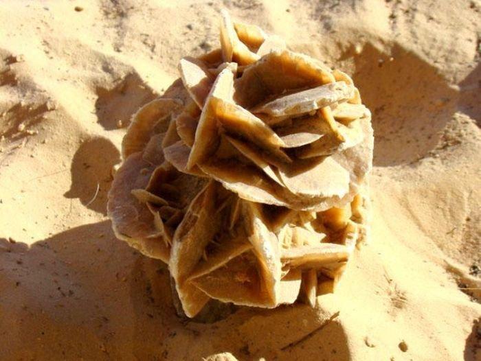 Экзотический сувенир – роза пустыни