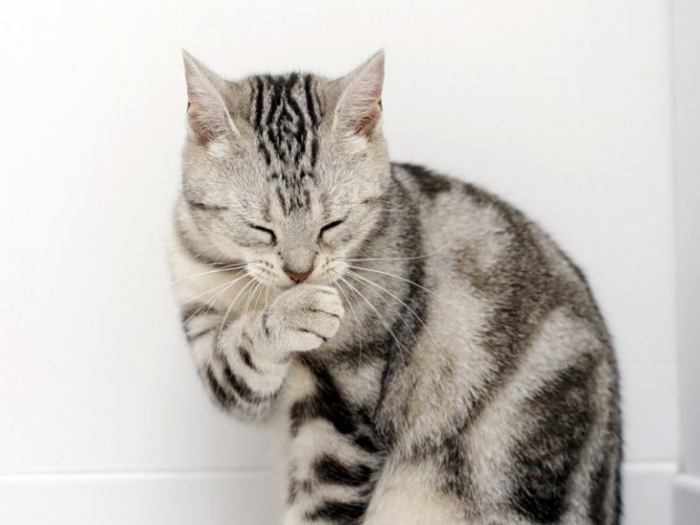 Глупые мифы о кошках
