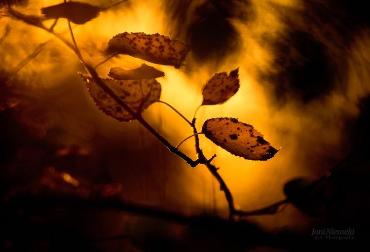 Красота осени в фотографиях Джони Ниемела