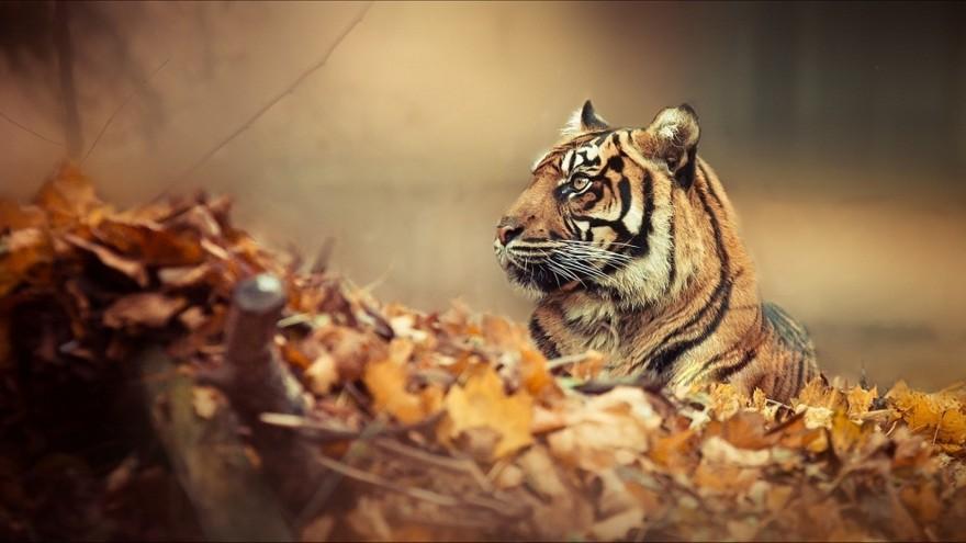 Осень и животные в красочных фотографиях