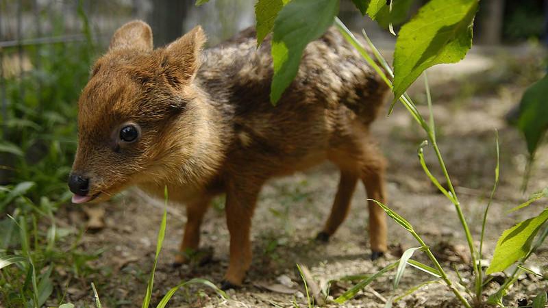 Самые маленькие животные в своём роде
